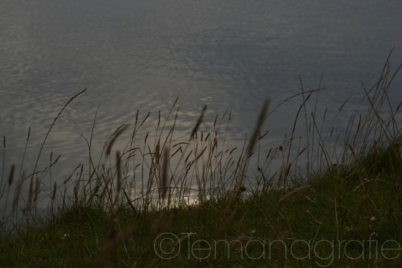 See und Wiese.jpg